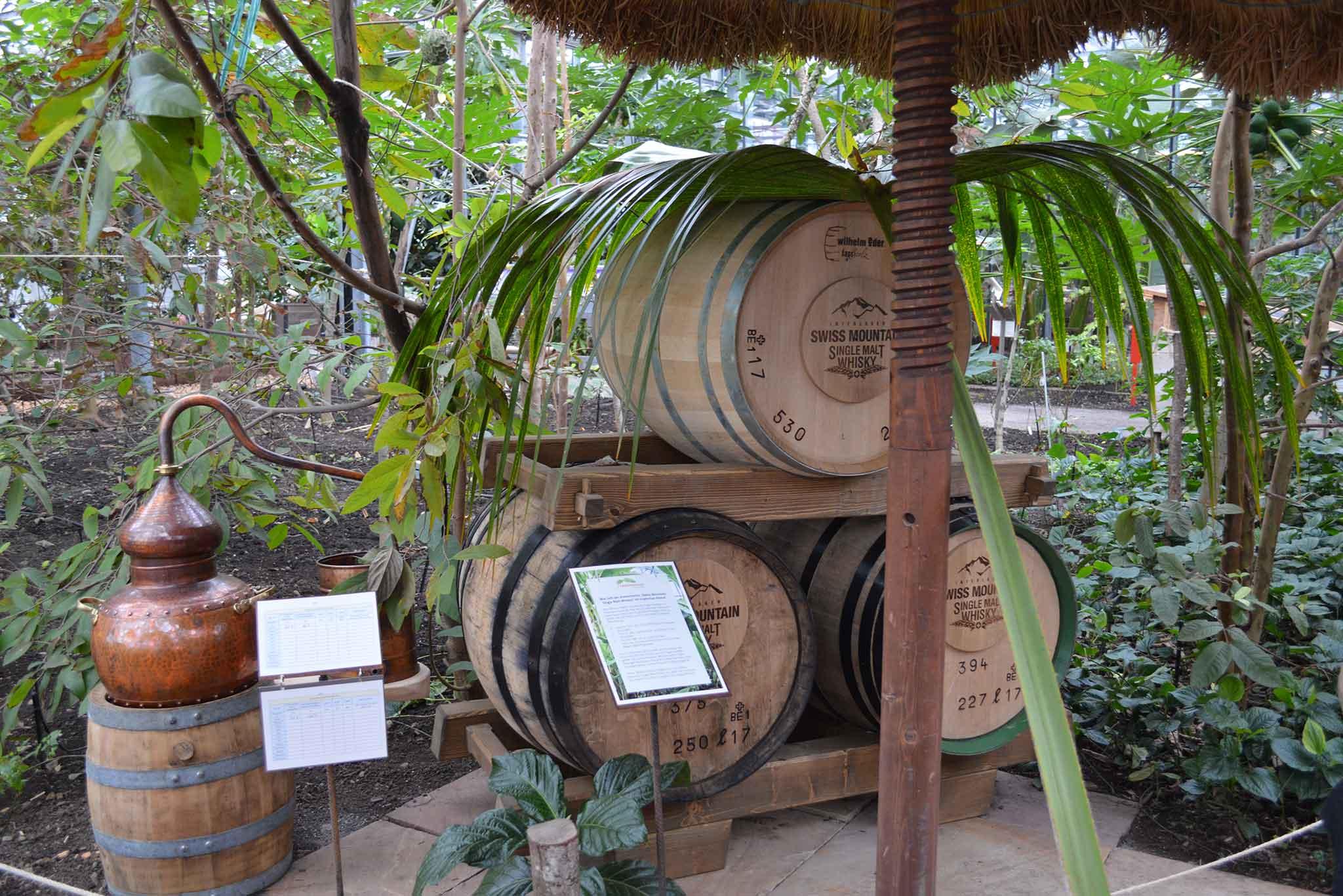 Whisky aus dem Tropenhaus Frutigen - Falstaff